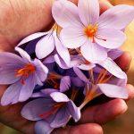 Blog: Abundance
